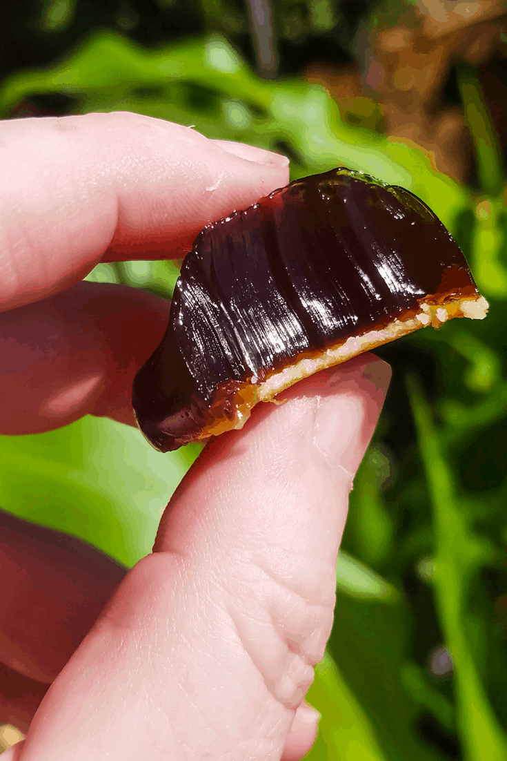 Mad Creations Coffee Jellies